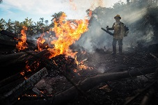 Burning the Amazon forests